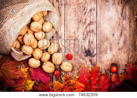 Nuts and colorful leaves of the tree background.