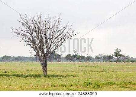 Swamp landscape in Tsavo East National Park Kenya poster
