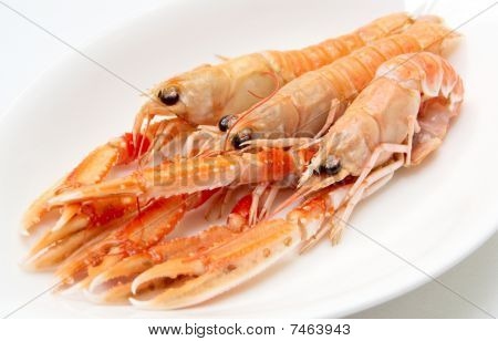Three Langoustines In Porcelain Plate