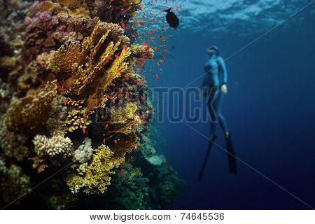Underwater shot of the lady free diver ascending along the vivid coral reef. Focus on the corals, diver is blurred. Red Sea, Egypt