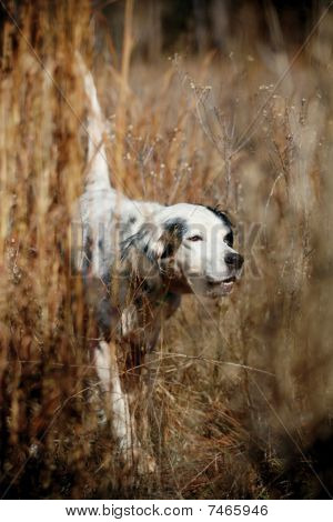 Dog Assists In Bird Hunting