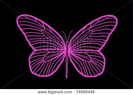 Florescent Colorful Pink Butterfly