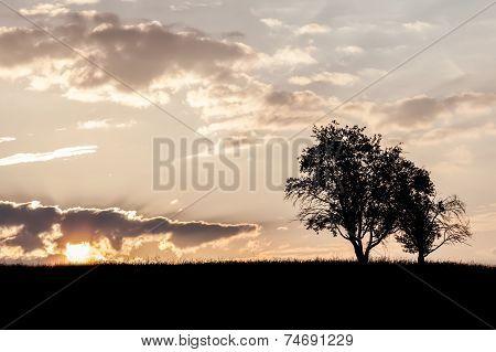 Trees At Morning
