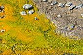 Colorful algae around hot springs at Lake Bogoria in Kenya. poster