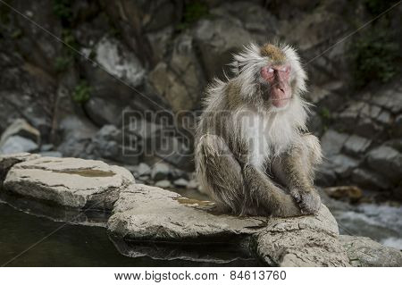 a monkey sits on his own in Japan