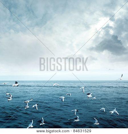 Sea Gulls Fly