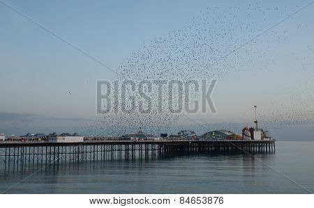 Starling Murmuration Over Brighton Pier