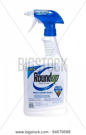 Hayward, CA - February 23, 2015: 24 fl oz Bottle of Roundup brand ready to use weed and grass killer -Illustrative Editorial