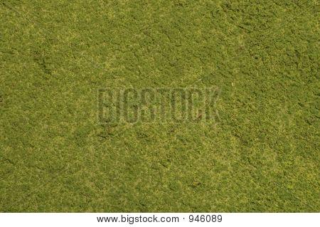 Mossgrass