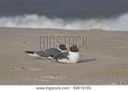 Close Seagulls