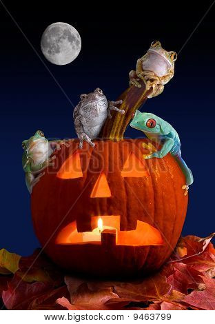 A group of tree frogs are sitting on a pumpkin on Halloween night. poster