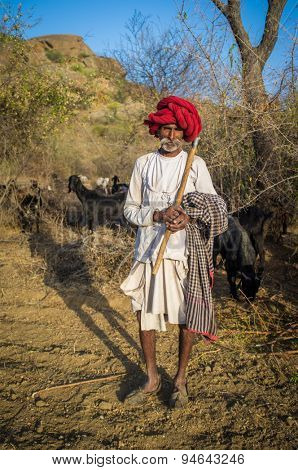 GODWAR REGION, INDIA - 13 FEBRUARY 2015: Rabari tribesman holds traditional axe on field and stands close to herd. Rabari or Rewari are an Indian community in the state of Gujarat.