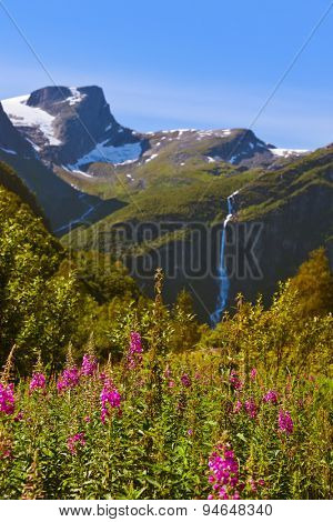 Meadow near Briksdal glacier - Norway - nature and travel background