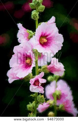 Hollyhocks Flowers