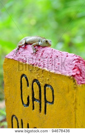Con Dao, Vietnam - July 1, 2012: A Green Gecko Is Hanging On A Milestones In The Con Dao Island Of V