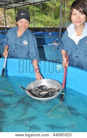 Lam Dong, Vietnam - May 5, 2012: A Sturgeon Hatchery Is Being Introduced To Farmers In Tuyen Lam Lak