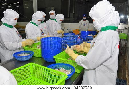 Hau Giang, Vietnam - June 23, 2013: Workers Are Working In A Shrimp Processing Plant In Hau Giang, A