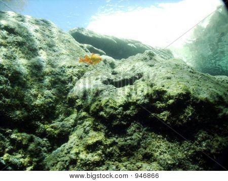 Blue Hole Fish
