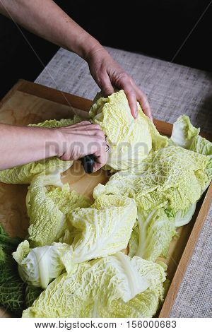 Splitinng of cabbage leaves before preparing Golabki a traditional Polish dish