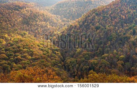 Fall Colors In Forest At Coopers Rock State Park Wv