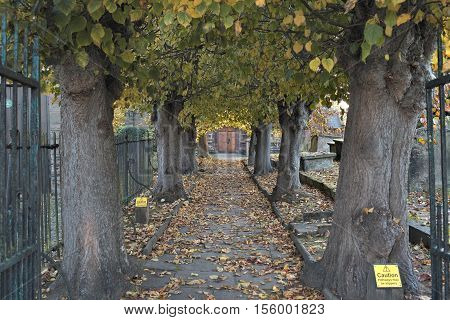 Alley with old trees leading to wooden door