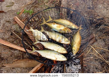 Grilling fish on campfire, Fish fried on grill