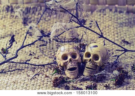 Still life concept human body bone male and female sit on dry branches with old cobweb and flower of moke indicate love forever.