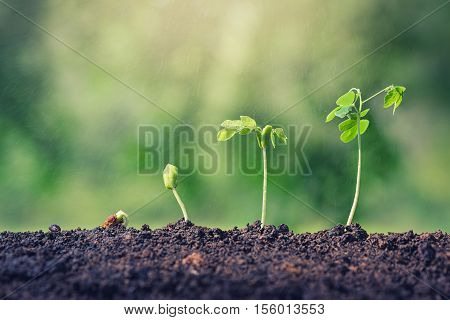 Plant seed growing concept. Water rain water plants. Plants need water. Small plants. Plants make the world cooler. Edible plants. Plant trees make air freshener. Closeup plant on green background.
