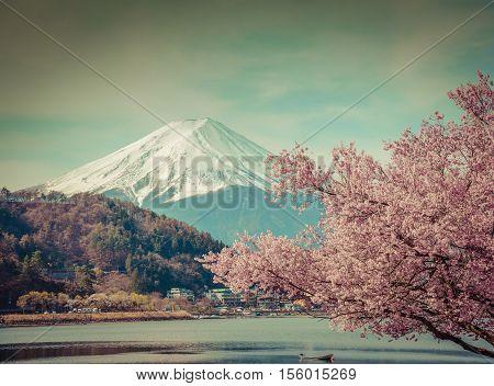 Mountain Fuji In Spring ,cherry Blossom Sakura,vintage