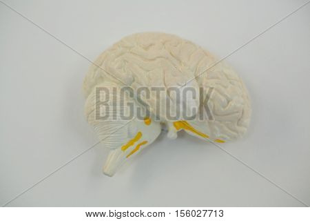 Close-up of human brain on white background