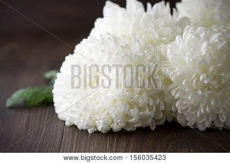 White chrysanthemums with leaf on a dark wooden background. Autumn fresh flowers on the brown table. Selective focus.
