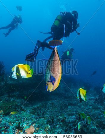 A School Of Banner Fish, The Maldives