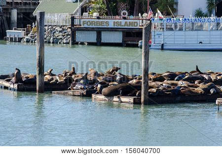 Sea Lions Sunbathe On Pier 39 In San Francisco Usa