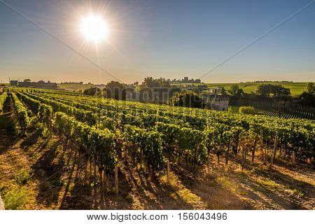 Morning view at wineyards of Saint Emilion in France