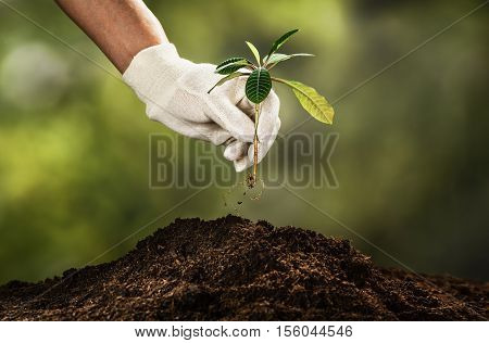 Planting a small plant on a pile of soil on green bokeh backgroud. Gardening backdrop for advertising.