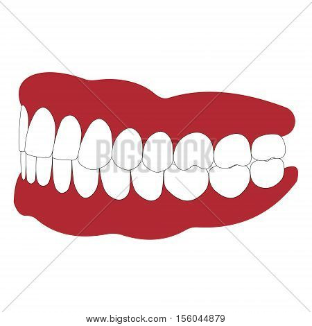 dentures with white teeth, dentition the gums of the upper and lower jaw, the bite in occlusion, vector illustration for dental clinic