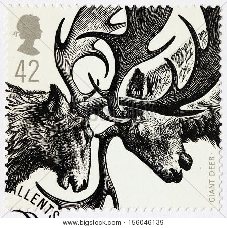 LUGA RUSSIA - NOVEMBER 6 2016: A stamp printed by GREAT BRITAIN shows two Giant Deers - Ice Age Animal circa 2006