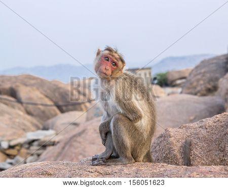 The cutest monkey in India Hampi Hanuman Temple