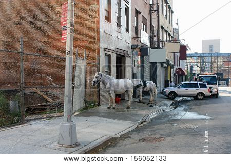 New York, suburban street. Washing of cars and horses. Beautiful horse in the center of American city.