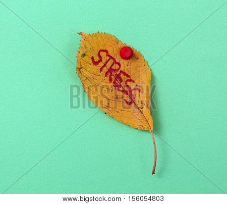 picture of a autumn walnut leaves with handwritten text stress