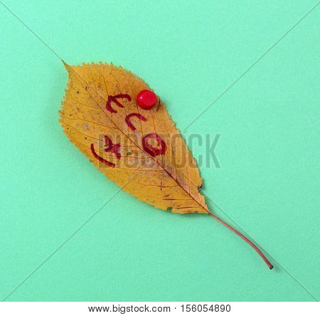 picture of a autumn walnut leaves with handwritten text eco