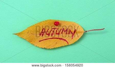 picture of a autumn walnut leaves with handwritten text autumn