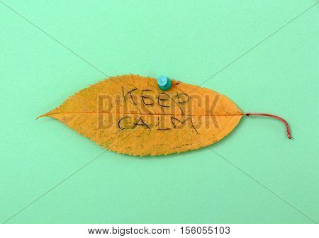 picture of a autumn walnut leaves with handwritten text keep calm poster