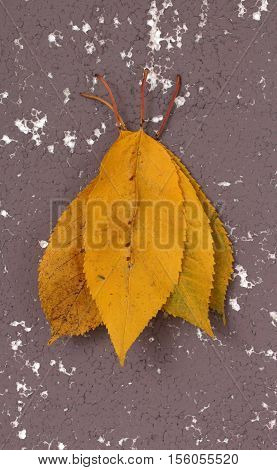 picture of an autumn walnut leaves on styrofoam