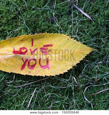 picture of a autumn walnut leaves with handwritten text i love you