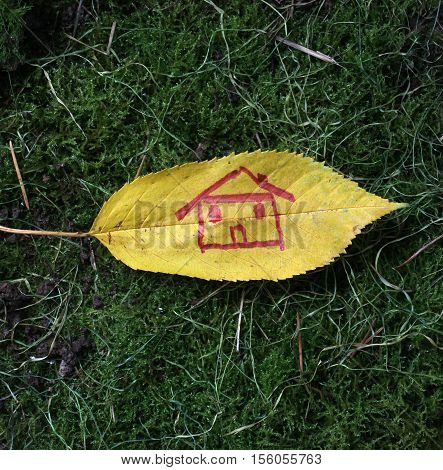 picture of a autumn walnut leaves with house shape draw