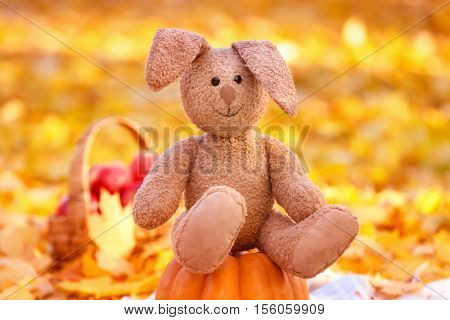 Cute cuddly toy on pumpkin in autumn park
