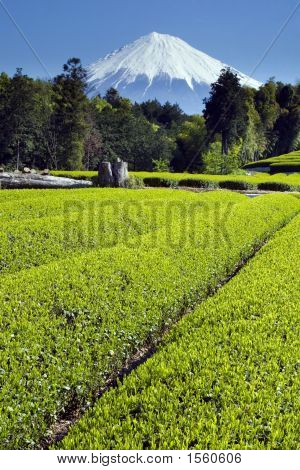 Fields of new green tea in Spring with Mount Fuji poster