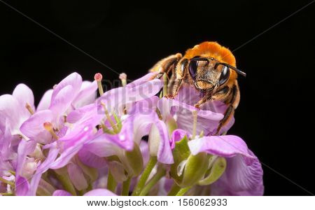 Bee Front View