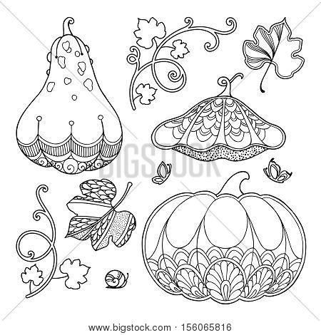 Nature elements vector set in doodle style. Floral, ornate, decorative, tribal, garden design elements. Black and white illustration. Pumpkins, leaves. Zentangle coloring book page